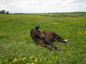 1271577331_horses_00055